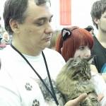 мэйн куны - самые большие коты на выставке