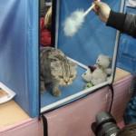 этот кот создан для фотокамеры