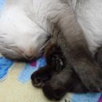 этой кошечке всё равно где сладко спать