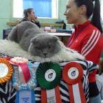кот Георгий почти с каждой выставки уносит медали