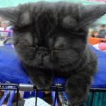 милый смешной черненький котенок