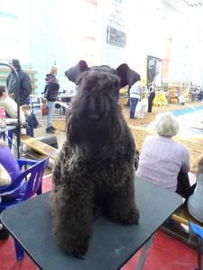 Собака на столике красуется