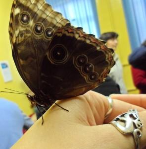 совсем ручная бабочка