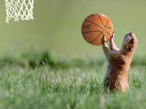 суслик играет в баскетбол