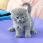 маленький котенок - большая радость!
